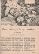 Article on gardening with South African daisies