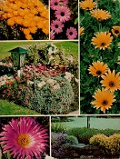 <i>Gardening with ground covers</i>, 1975
